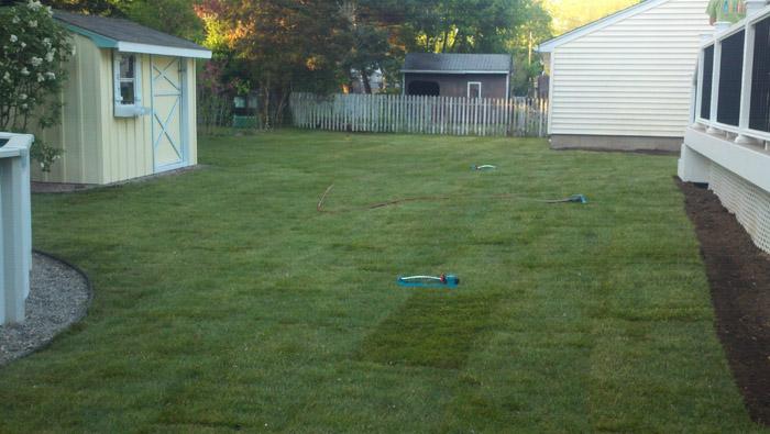 Lawn-Sod-015-after.jpg