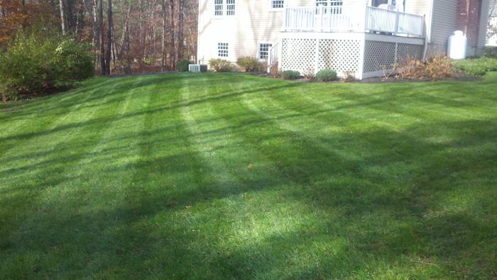 04-Lawns.jpg